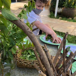 Projeto: Reino Plantae