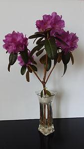 C23 Rhododendron.jpg