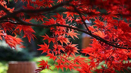 Fall-garden-plants-feature.jpg