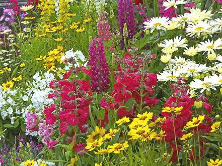 Summer garden 1.jpg