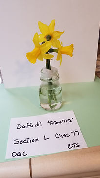 L77 Narcissus Tete-a-Tete 1.jpg