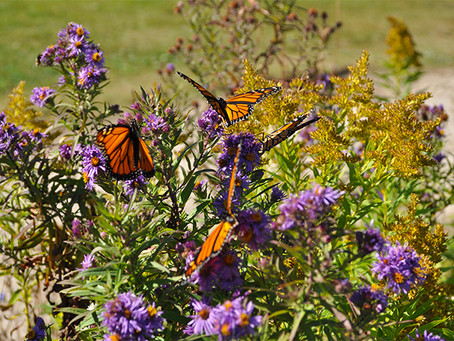 Funding for Pollinator Habitat Available