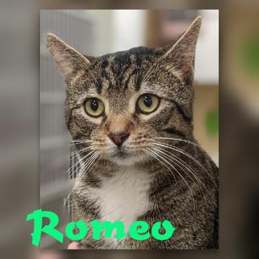 romeo (2).jpg