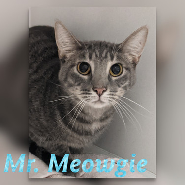 mr meow.jpg