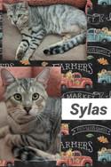 sylas.jpg
