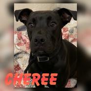 Cheree