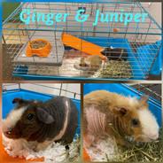 Juniper and Ginger