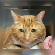 Jake cat.jpg