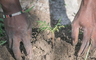 One Tree Planted-20.jpg