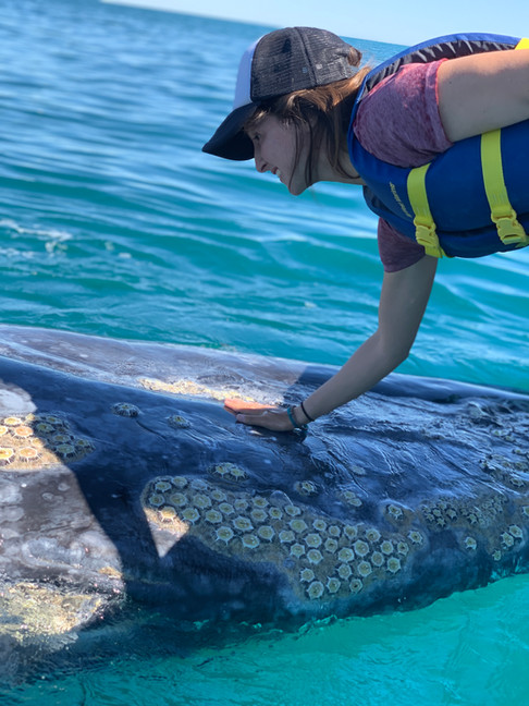 Touching a gray whale