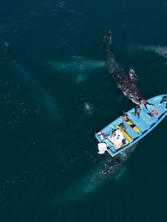 Surrounded by whales