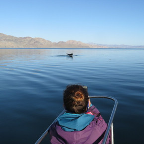 Looking for humpback whales