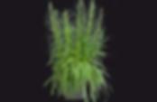 Pflanze-mit-RADIX-pro-300px.png