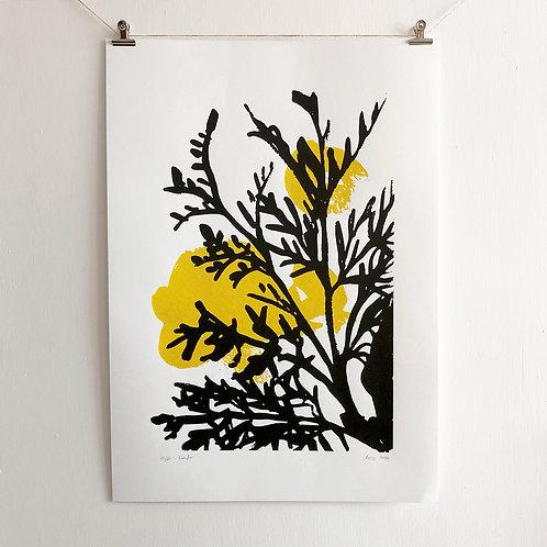 Conifer - Screen Print