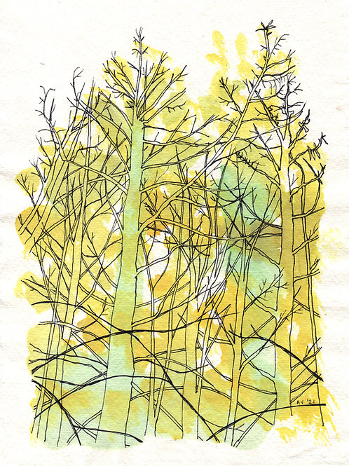 Larch Forest - original drawing with watercolour, unframed