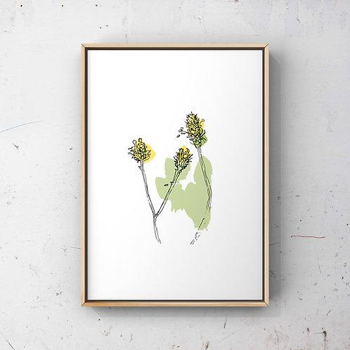 Wildflower Buds - A4 Print