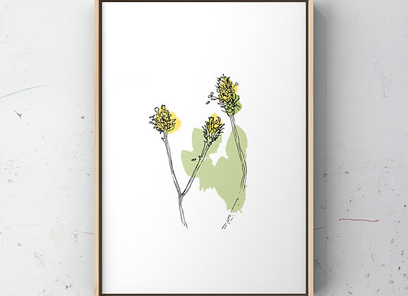 Wildflower Buds - A4 Print