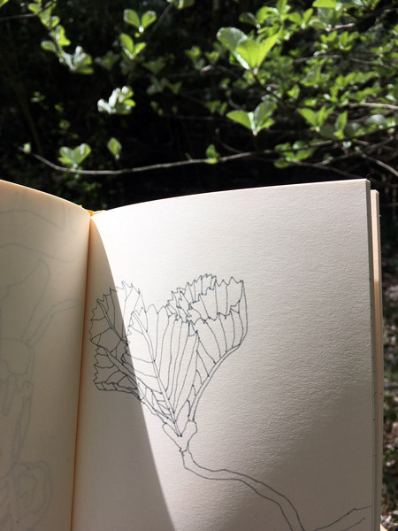 Beech leaf sketch Anna's Drawing Room