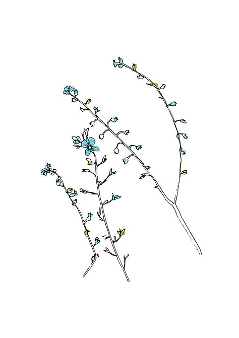 Forgetmenots-scaled-for-A4.jpg