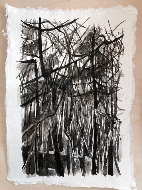 Larch / New Year's Day - Ink on Paper