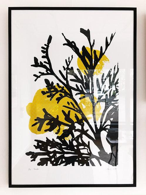 Conifer - Framed