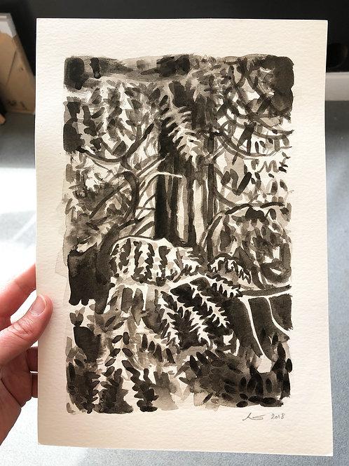 Redwood - Ink on Paper