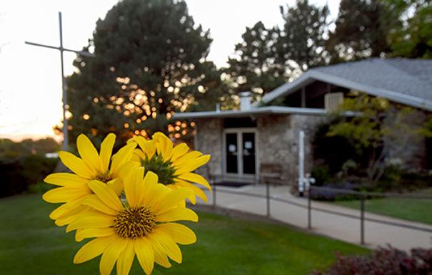 3 Sunflowers_webpage.jpg