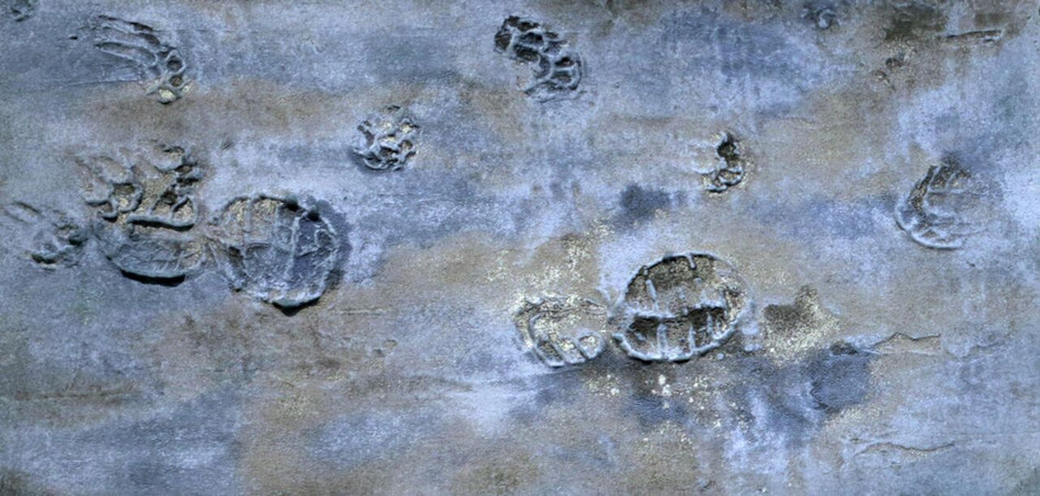 Dog and Human Prints
