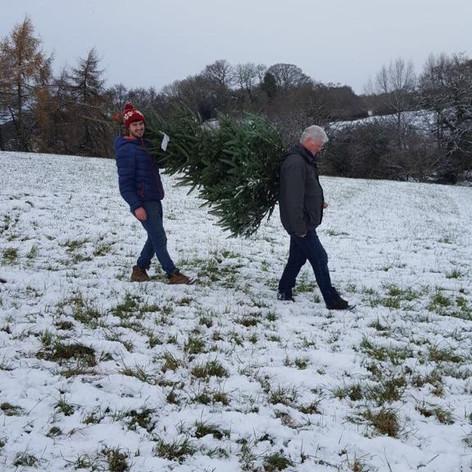 Paul & Jack carry tree