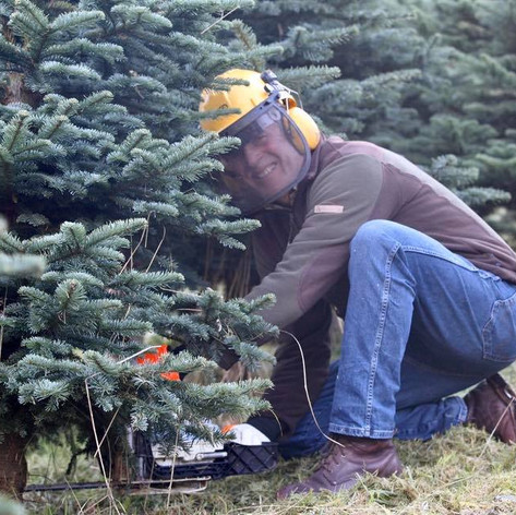 Russel Tree Cutting