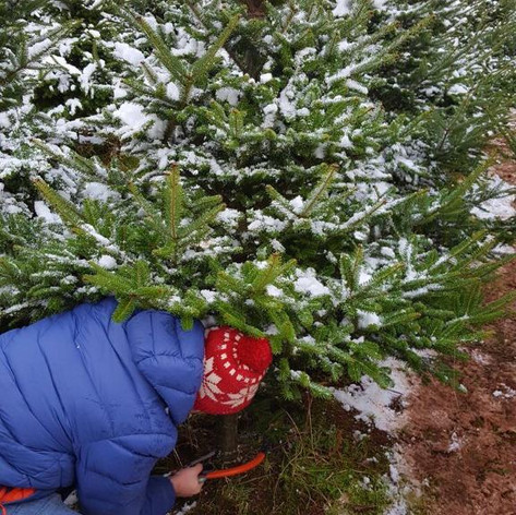 Jack cutting tree