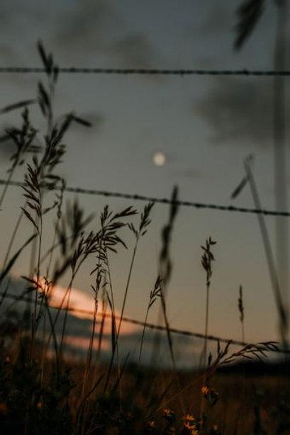 """""""Harvest Moon"""" - Digital File"""