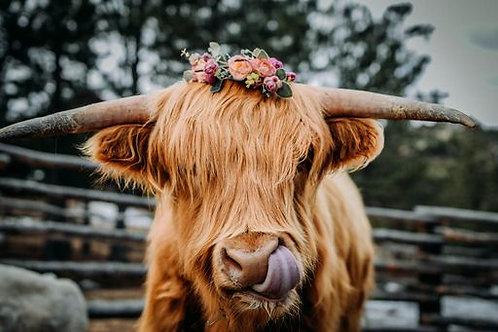 """Coachella Cow"" - Digital File"