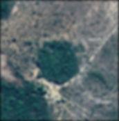 TreesVinesPalms_04.jpg