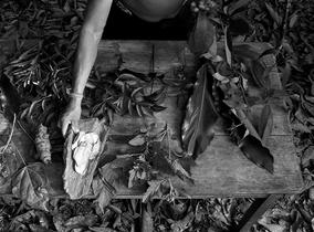 Forest Law / Selva Jurídica