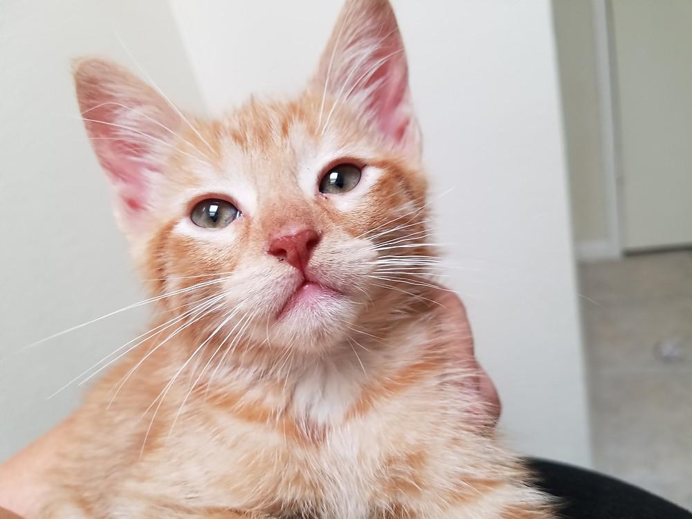 Meow!  Meet Garfield