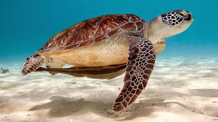 sea-turtle-background-6.jpg