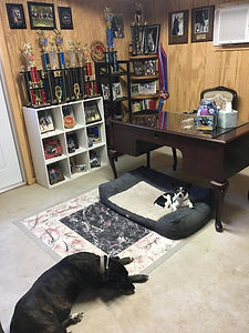 2019 office desk trophies dogs wix.jpg