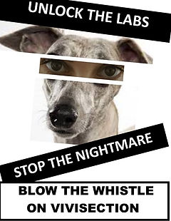 Vivisection BLOW THE WHISTLE.jpg