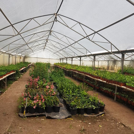 Agricultural Project in South Hebron Hills