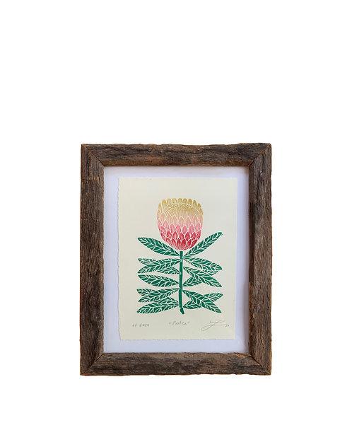 """Framed """"Protea"""""""