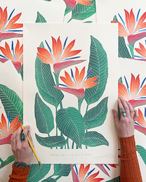 Bird of Paradise prints