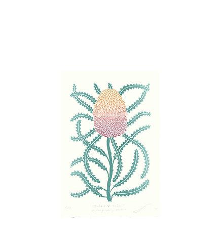 Banksia Victoriae aka Orange Woolly Banksia