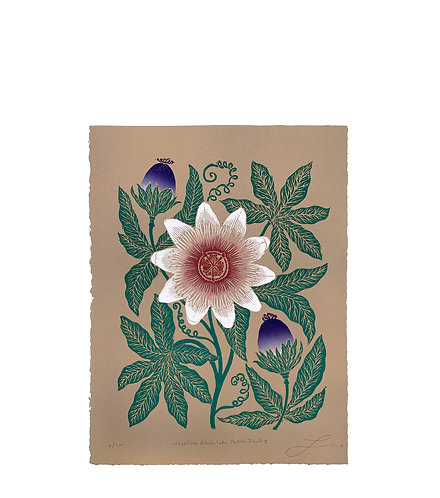 Passiflora Edulis aka Passion Fruit II