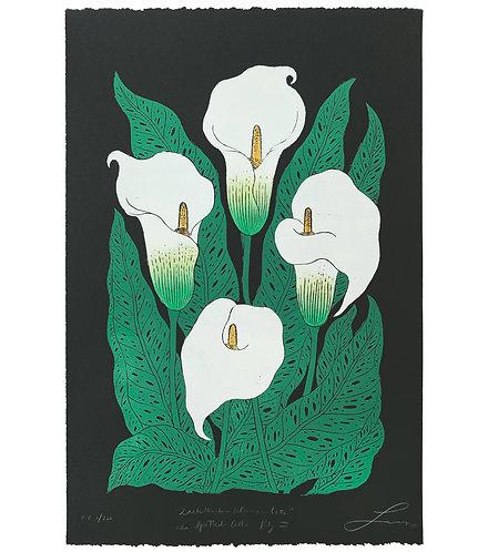 Zantedeschia Albomaculata aka Spotted Calla Lily III - Black Paper