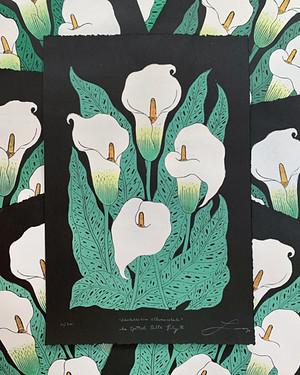 Calla Lily prints on black paper