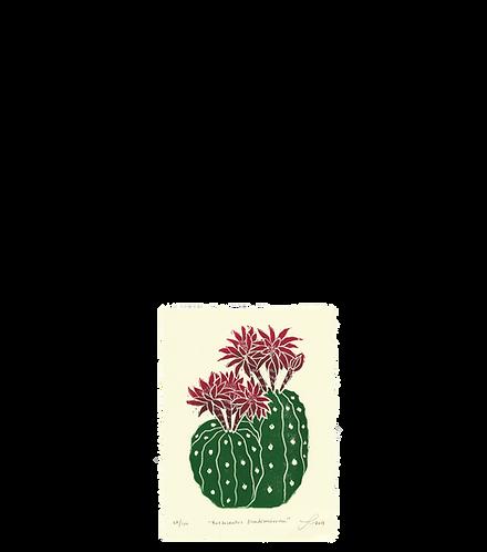 Borzicactus Madisoniorum