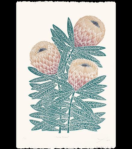 Protea Susara