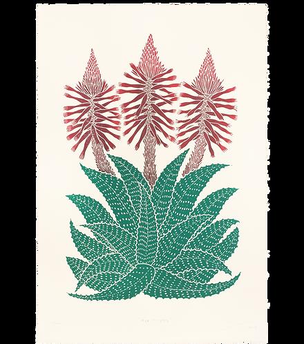 Aloe Vulgaris