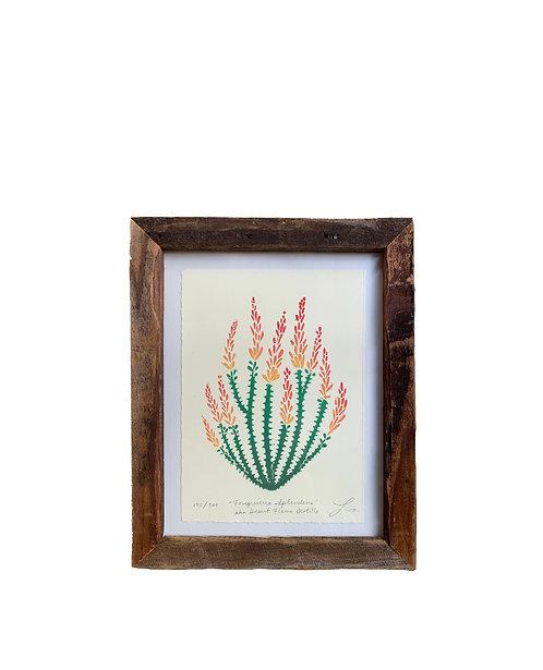 """Framed """"Fouquieria Splendens"""" aka Desert Flame Ocotillo"""